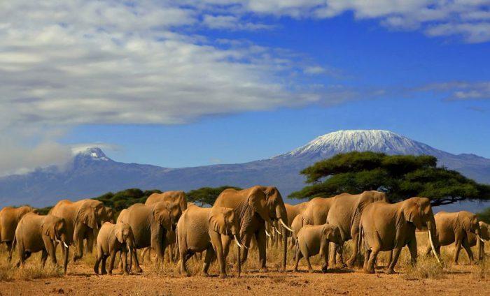 Картинки по запросу Национальный парк Амбосели.